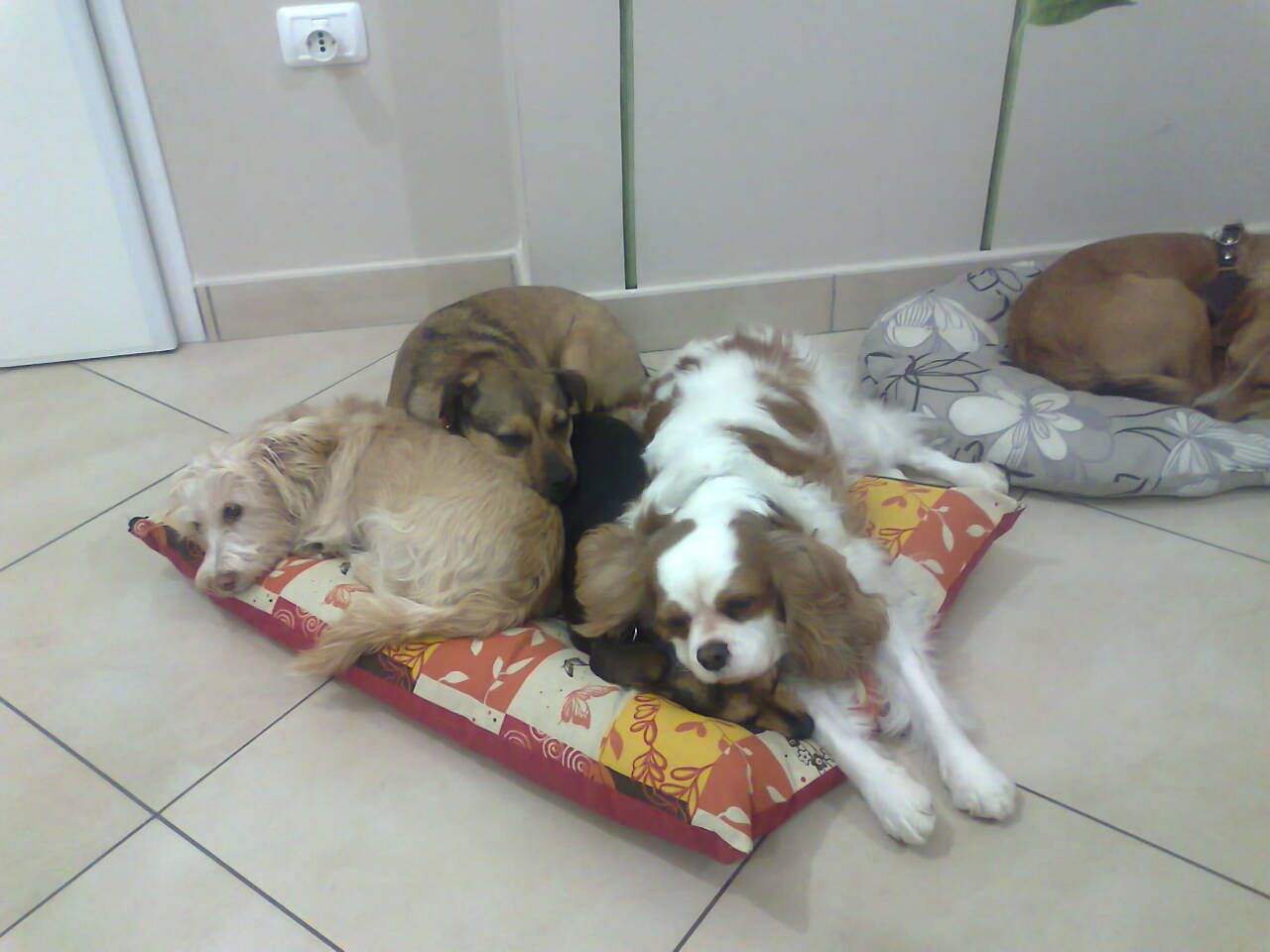 Agnese, Lully, Linda e Hope