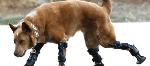 Cane bionico