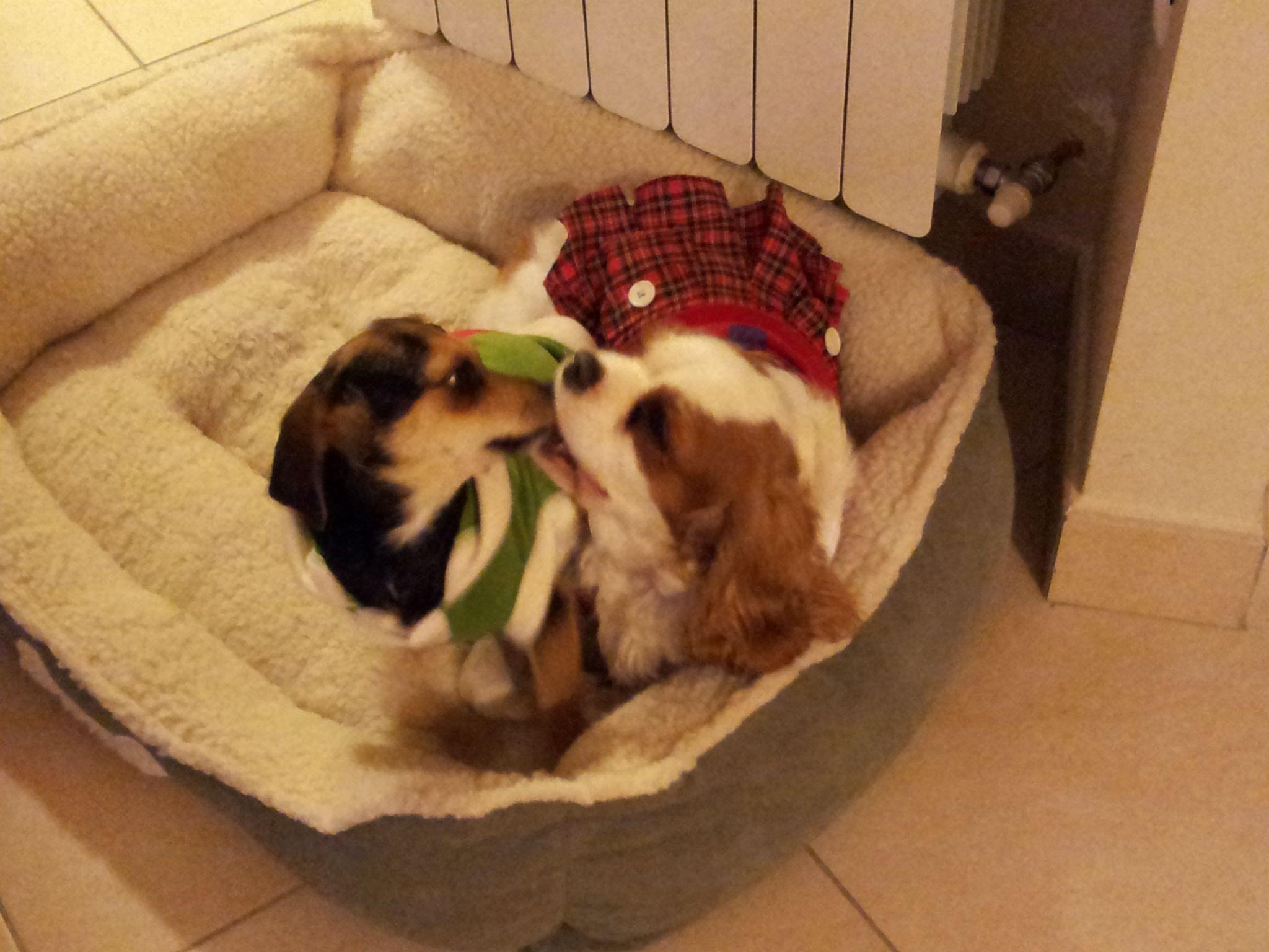 Hope e Linda si baciano a Natale 2011