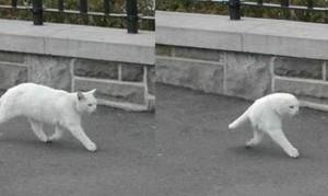 Mezzo gatto