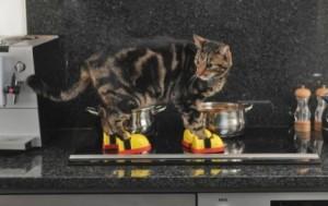 Scarpette per gatti