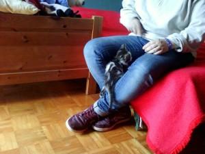 Pepita gattina di Elena Conti