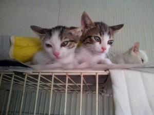 altri gattini