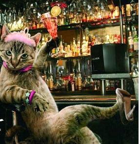 gatto bar