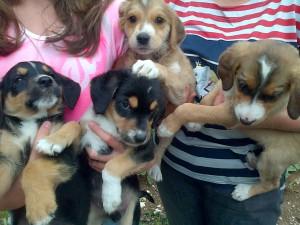 4 cuccioli taglia medio piccola