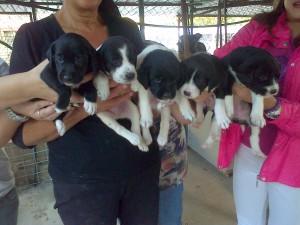 5 cuccioli