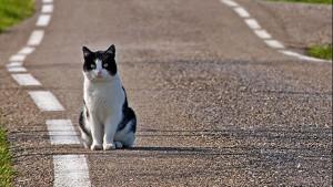 gatto scappa di casa