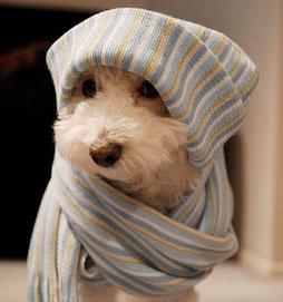 cane freddo
