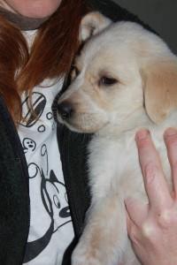 cucciolo beige