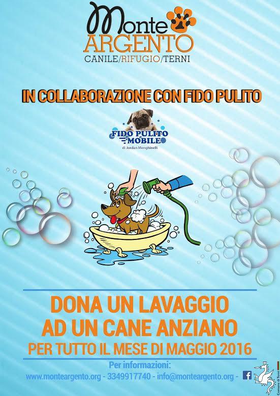 lavaggio cane